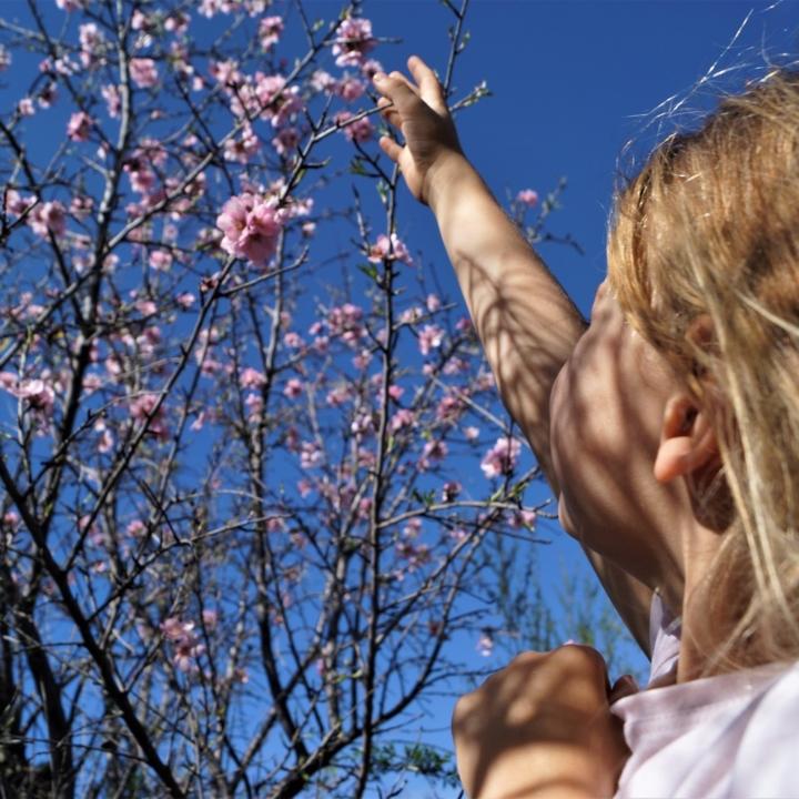 Tam, gdzie kwitną migdały - Santiago de Teide, Teneryfa